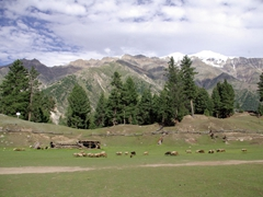 Fairy Meadows is an appropriate name for this incredibly scenic corner of Pakistan