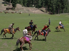 The stamina of polo horses is legendary; they can run for hours on end at high elevations