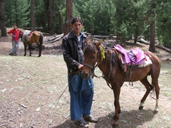 Becky's horse and guide patiently wait for us to settle our business at Fairy Meadows Cottages