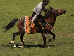 Polo is a tough sport! There are two halves, each lasting 25 minutes