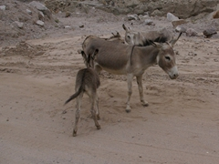 We were surprised to see these donkeys roaming free on the road side