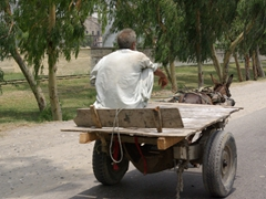 Our jeep zoomed by numerous modes of transport...donkey cart being the most common