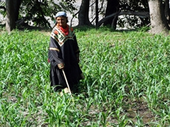 A Kalasha woman works the field (keep in mind it is in the middle of the summer and she is dressed from head to toe in black!)