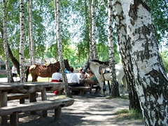 Riders and their horses take a shady break at a picnic area in Pirogovo open air museum