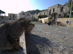 The uber friendly cats of Moni Preveli followed us around like dogs during our visit