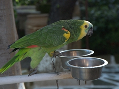 This noisy parrot was craving attention; Old Rhodes