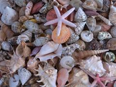 Seashells for sale; Rhodes harbor