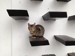 A smart cat seeking refuge from the rain; Lindos
