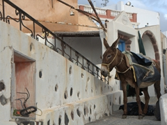 Donkey trash disposal service in Oia