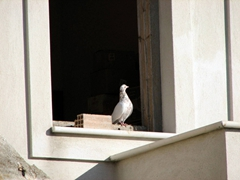 A curious pigeon waits to see if Becky will feed it as well