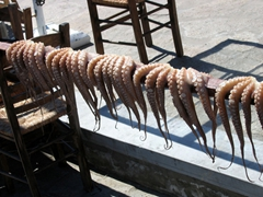 More octopus ready to be grilled and served