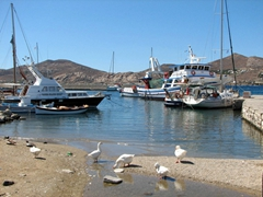 Territorial geese that think they own this section of the harbor; Naoussa