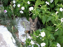 A cute kitty peers at us with curiosity; near Parikia's Frankish castle