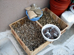 Fresh snails for sale; Parikia