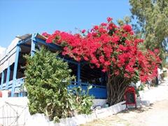 One of Livadakia Beach's three main tavernas