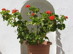 Rejoice plant-lovers! Greece is full of beautiful potted plants everywhere you look