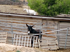 This donkey wanted to come out and play; outskirts of Spetses Town