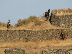 Hello donkeys!