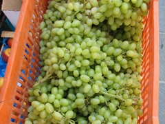 Fresh grapes for sale; Poros Town