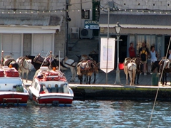 A long line of donkeys and mules await passengers along Hydra's port. Due to the absence of scooters/motorbikes, donkeys and mules are the main mode of transport in Hydra