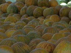 Close up view of melons for sale (a popular post-meal snack served after lunch and dinner)