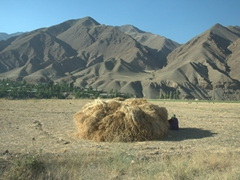 A lady seeks refuge from the sun in the shadow of a haystack