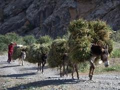 Donkey caravan at Hazor Chashma (7th Lake); Marguzor