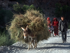 Donkeys are a common mode of transport linking the seven villages of Marguzor Lake together