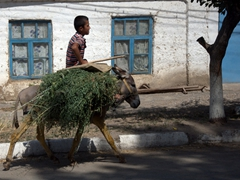 A boy and his donkey ride through Ayni
