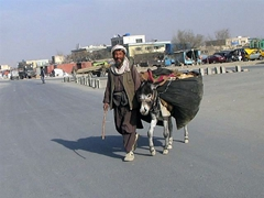 Donkey transport; outskirts of Kabul