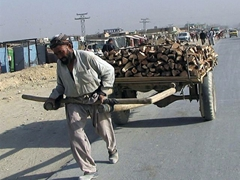 Transporting wood; Kabul