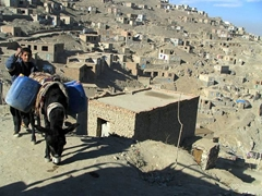 A boy behind his donkey, Kabul Hillside