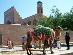 Khiva's sole camel (a major tourist attraction for over a decade!)