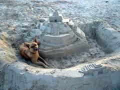 Awww, too cute! This dog spent all day helping its owner build the sand castle and then plopped down next to it for a well deserved rest