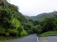 El Yunque is a popular destination and its easy to see why
