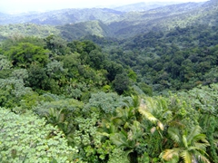 View of a portion of El Yunque's 28,000 acres of verdant foliage; Mt Britton