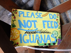 Mamacitas is explicit about NOT feeding the iguanas who appear by the dock as if begging for food