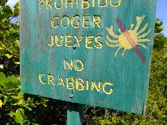 Damn, no crabbing allowed on Culebrita