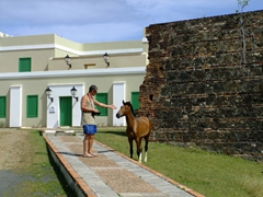 Robby tries to befriend a wild horse; Fort Count Mirasol Museum at Isabell II