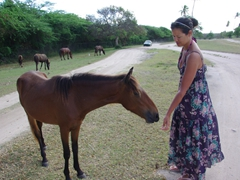Becky allows a wild horse to smell her; Sun Bay on Vieques