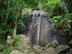 La Cola waterfall is the easiest one to spot (it is visible from the road); El Yunque national park