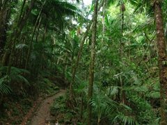 Most of El Yunque's hiking trails were very well laid out and easy to navigate