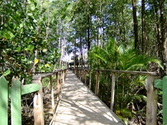 Bridge over the mangrove forest; Marigot Bay