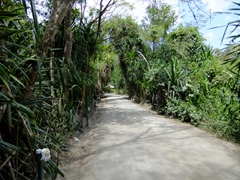 Foot path leading to the Anse Chastanet beach resort