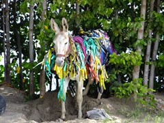 This poor donkey looks absolutely miserable, adorned in silly ribbons; South Frigate Bay