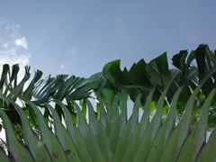 Palm fronds; Independence Square