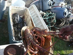 Lobster will be on the menu for this fisherman tonight