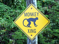 Yield to monkeys crossing the road