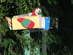 A colorful parrot mailbox
