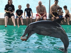 The dolphins are super eager to play catch with the football; Blue Lagoon Island